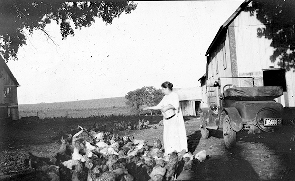 Feeding the chickens Gray 8SM